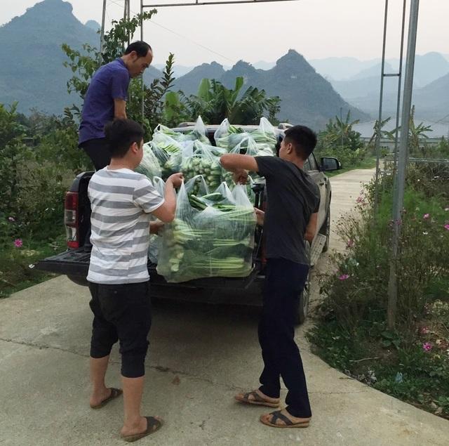 """Chủ vườn ở Lai Châu """"hái"""" 2 tấn rau ủng hộ người cách ly ở Hà Nội - 1"""