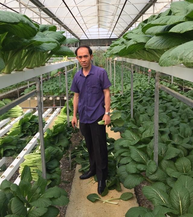 """Chủ vườn ở Lai Châu """"hái"""" 2 tấn rau ủng hộ người cách ly ở Hà Nội - 11"""