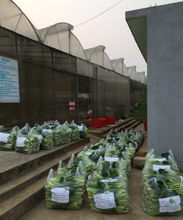 """Chủ vườn ở Lai Châu """"hái"""" 2 tấn rau ủng hộ người cách ly ở Hà Nội - 3"""