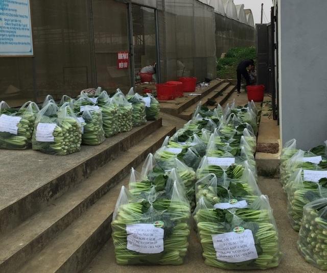 """Chủ vườn ở Lai Châu """"hái"""" 2 tấn rau ủng hộ người cách ly ở Hà Nội - 9"""