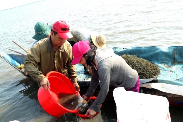 Ngư dân Quảng Nam được mùa rong câu - 3