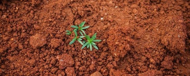 Đất có thể hấp thụ 5,5 tỷ tấn carbon dioxide hàng năm - 1