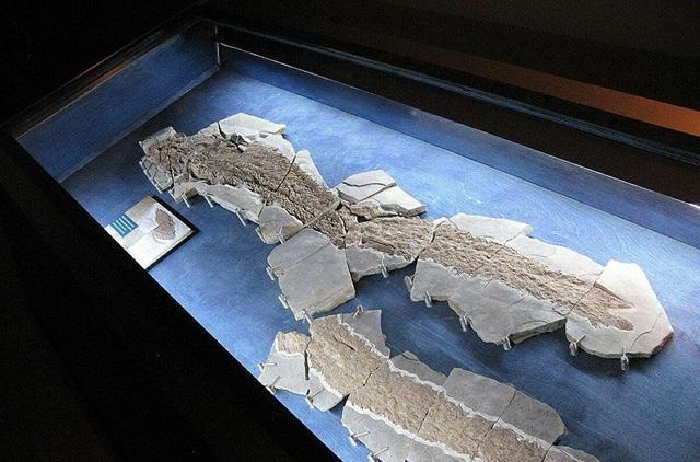 Loài cá cổ đại hé lộ thông tin về sự tiến hóa của bàn tay con người - 1