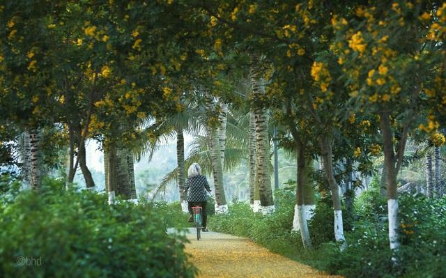 Những góc lãng mạn tại thành phố triệu cây xanh - 5