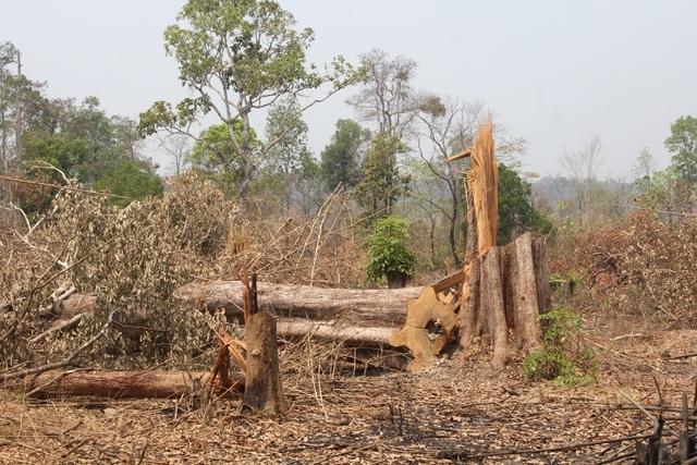 Khởi tố 3 vụ phá rừng trên khu vực biên giới - 1