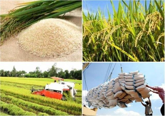 Bộ Nông nghiệp nỗ lực đảm bảo kế hoạch sản xuất lúa gạo mùa dịch - 1