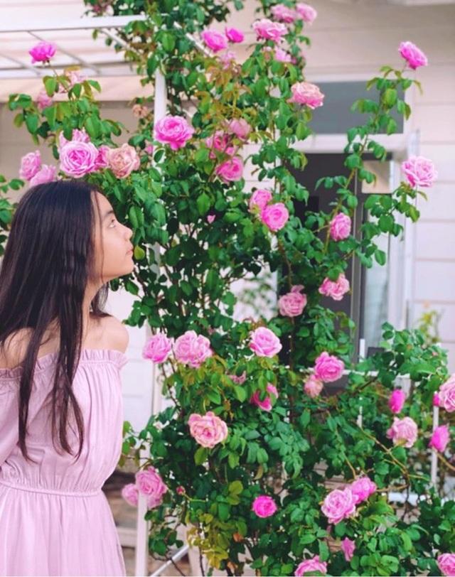 Đã mắt với khu vườn sai trĩu quả, ngập hoa của gia đình MC Quyền Linh - 14
