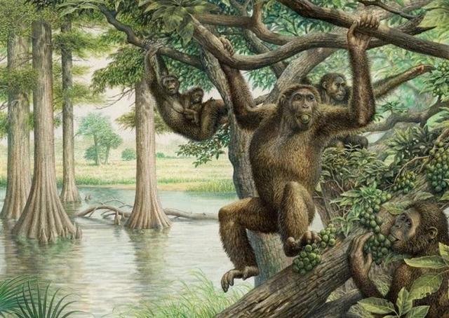 Loài người sơ khai cũng ăn chay và đu mình giữa các cành cây - 4