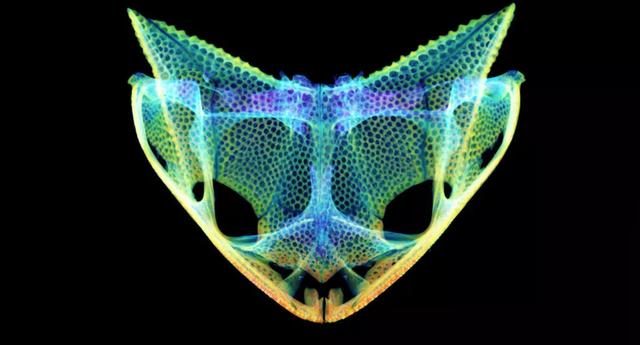Phát hiện những đặc điểm tiến hoá kì lạ trong hộp sọ loài ếch - 1