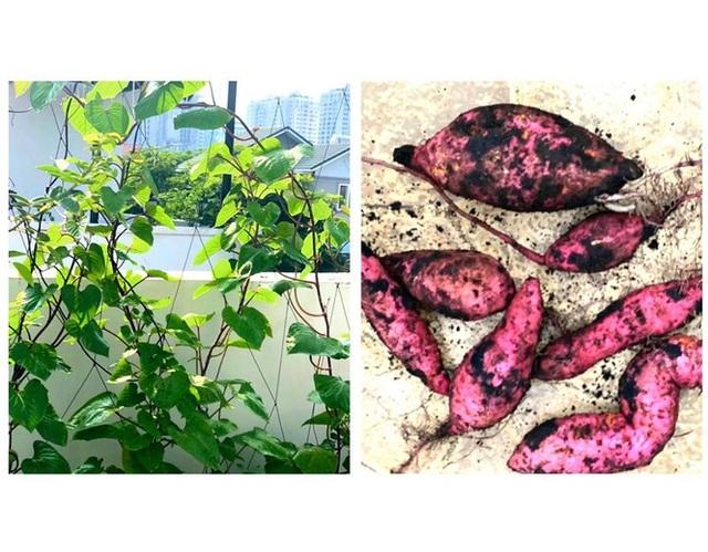 Đã mắt với khu vườn sai trĩu quả, ngập hoa của gia đình MC Quyền Linh - 8