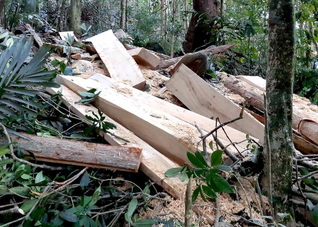 Khởi tố vụ phá rừng phòng hộ nghiêm trọng sau phản ánh của Báo Dân trí! - 5