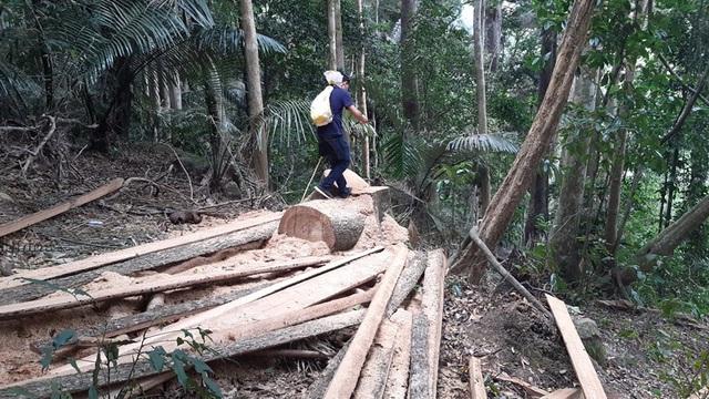 Khởi tố vụ phá rừng phòng hộ nghiêm trọng sau phản ánh của Báo Dân trí! - 1