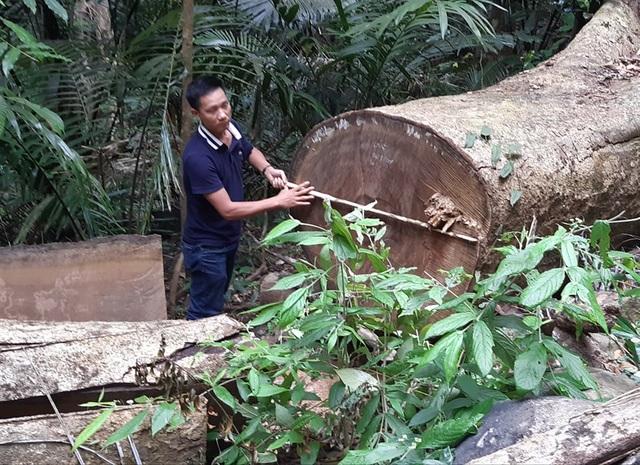 Khởi tố vụ phá rừng phòng hộ nghiêm trọng sau phản ánh của Báo Dân trí! - 2