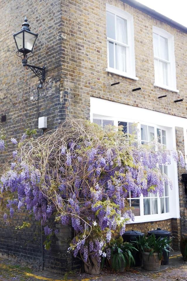 Những biệt thự phủ kín sắc tím hoa tử đằng đẹp như cổ tích ở Anh - 3