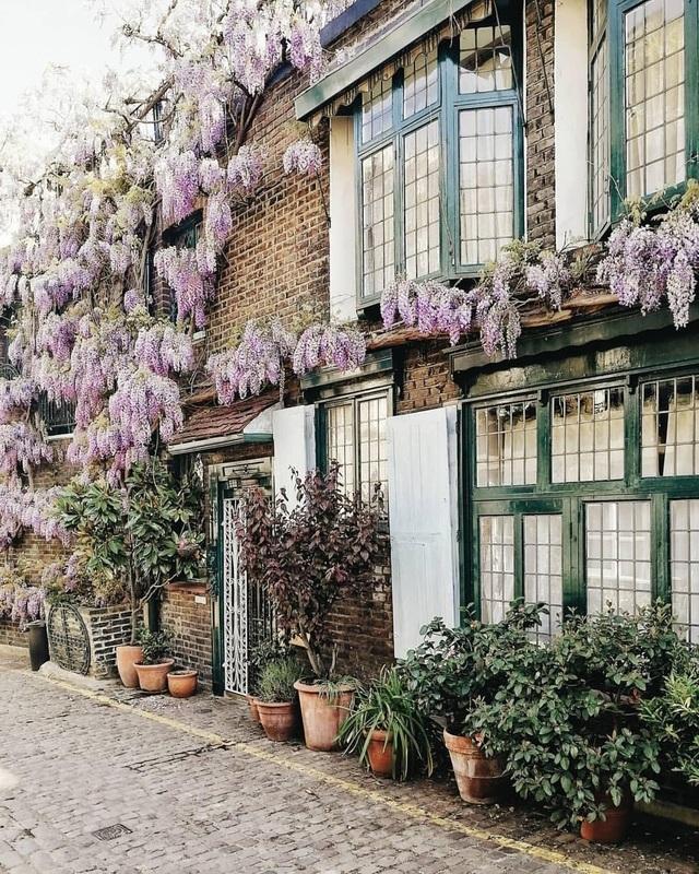 Những biệt thự phủ kín sắc tím hoa tử đằng đẹp như cổ tích ở Anh - 8