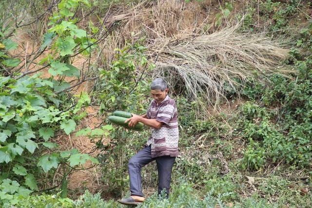 Lão nông hiến mảnh đất gần 700m2 để huyện bán lấy tiền chống dịch - 5