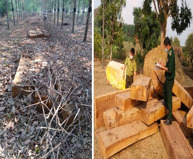 Liên tiếp phát hiện nhiều vụ tàng trữ gỗ lậu lớn tại huyện biên giới - 1