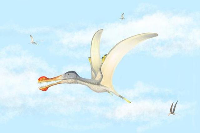 Phát hiện 3 loài bò sát bay mới ở Sahara - 1