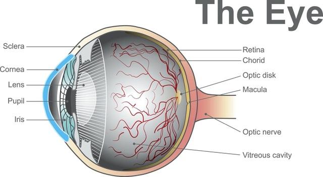 Thiết bị đặc biệt mới giúp phát hiện sớm các vấn đề về thị lực - 1