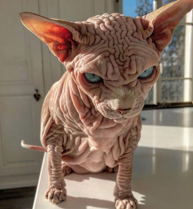 Gặp Xherdan, chú mèo ngọt ngào có vẻ ngoài siêu đáng sợ - 6