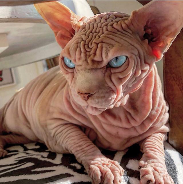 Gặp Xherdan, chú mèo ngọt ngào có vẻ ngoài siêu đáng sợ - 5