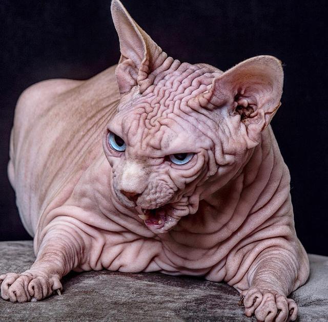 Gặp Xherdan, chú mèo ngọt ngào có vẻ ngoài siêu đáng sợ - 7