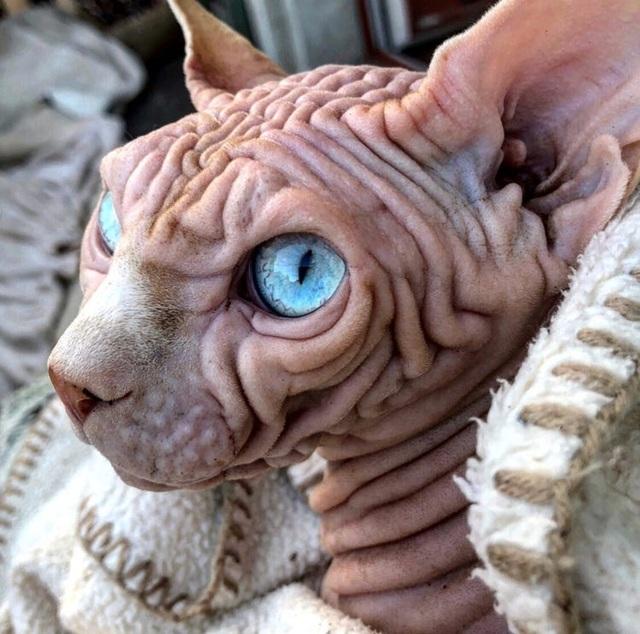 Gặp Xherdan, chú mèo ngọt ngào có vẻ ngoài siêu đáng sợ - 1