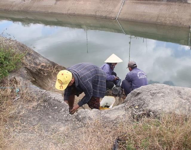 Nông dân cầu cứu thủy điện xả nước cứu hạn - 1