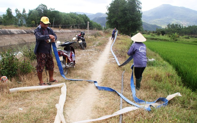 Nông dân cầu cứu thủy điện xả nước cứu hạn - 2