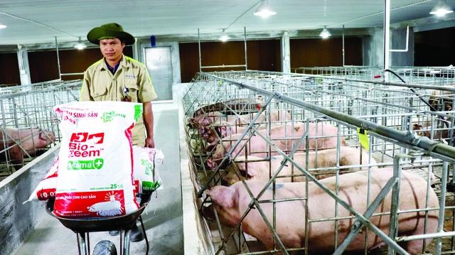 """Masan """"hiến kế"""" doanh nghiệp cùng bắt tay giảm giá thịt lợn - 1"""