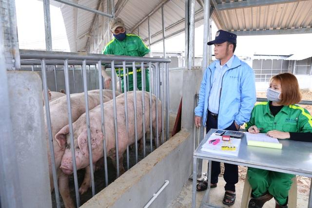 """Masan """"hiến kế"""" doanh nghiệp cùng bắt tay giảm giá thịt lợn - 2"""