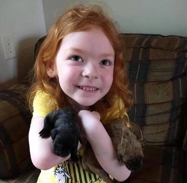 Bé gái 4 tuổi sống sót thần kỳ sau 2 ngày đi lạc trong rừng - 3
