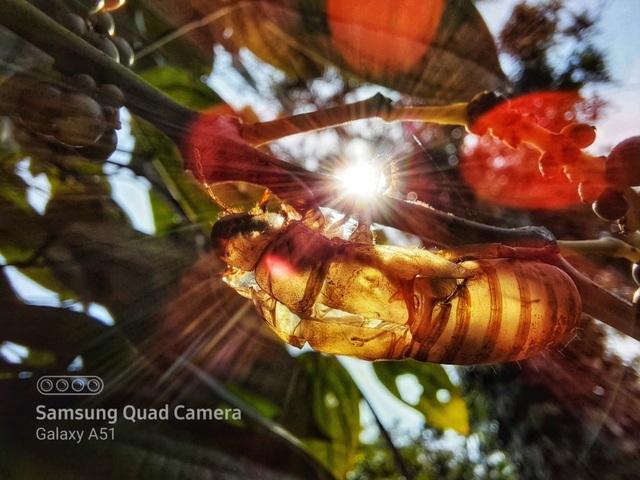 Nhiếp ảnh gia 'thán phục' nhiếp ảnh macro trên Galaxy A71|A51 - 1