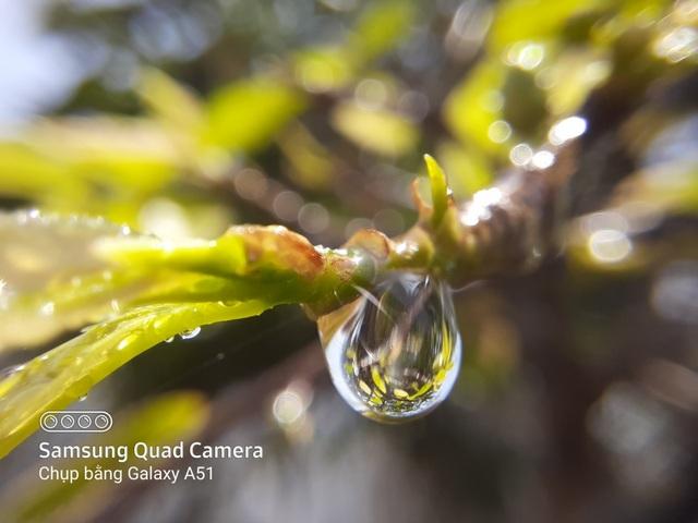 Nhiếp ảnh gia 'thán phục' nhiếp ảnh macro ở trên Galaxy A71|A51 - 2
