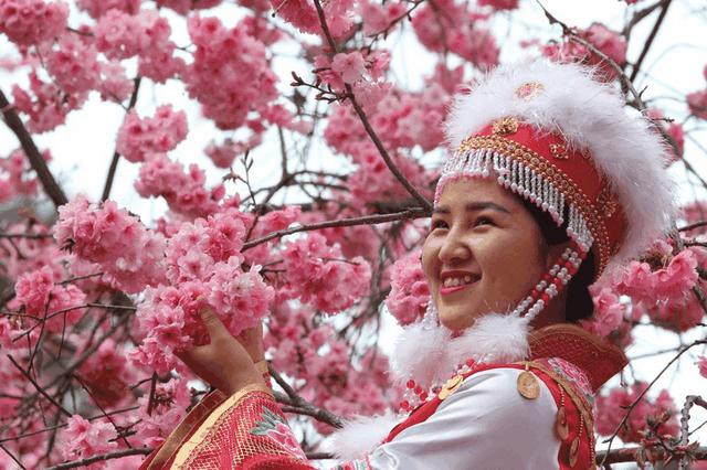 700.000 cây anh đào nở hoa đồng loạt giữa thời điểm dịch bệnh hoành hành - 2