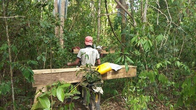 Hàng nghìn hecta rừng tại Gia Lai tan biến do đâu? - 1