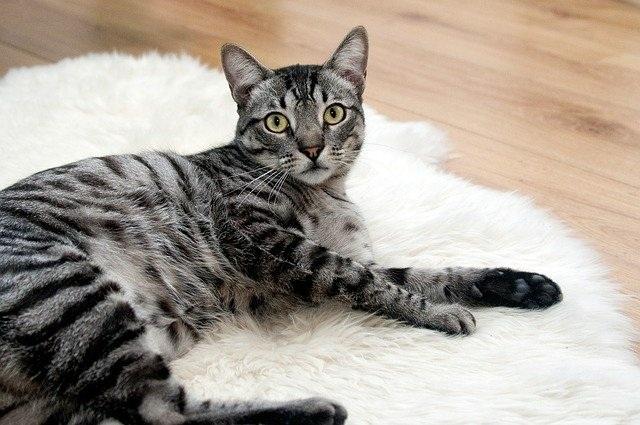 Tìm thấy dấu hiệu SARS-CoV-2 lây lan trong quần thể mèo ở Vũ Hán - 1
