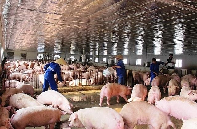 Bộ trưởng Nông nghiệp nói thật lý do giá thịt lợn vẫn quá đắt - 1