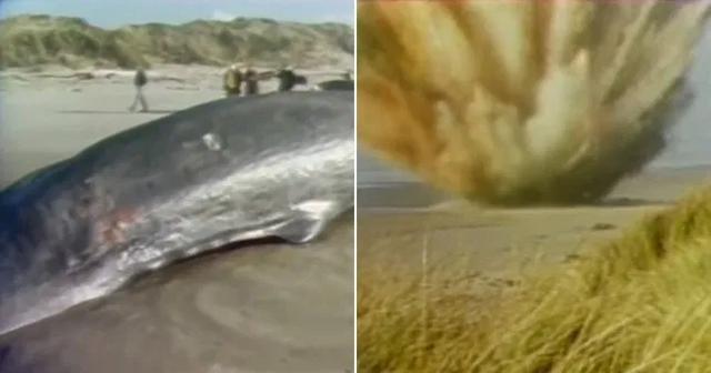 Tiêu hủy cá voi bằng nửa tấn thuốc nổ và cái kết - 1