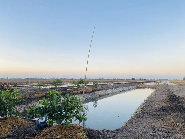 Tiết kiệm 100 triệu, vợ chồng trẻ ở Đồng Nai bỏ phố về quê đào ao, thả cá - 1