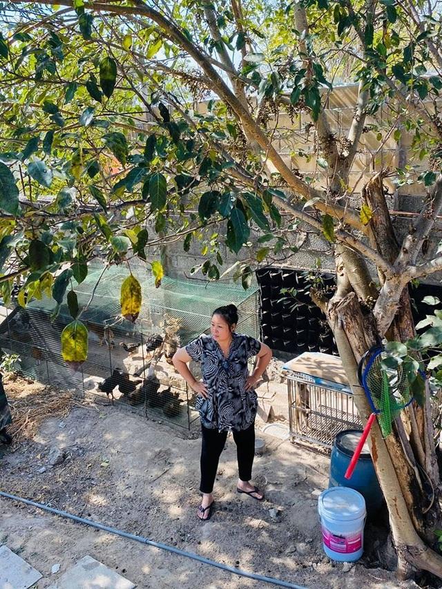 NSND Hồng Vân, Quốc Thuận khoe vườn nhà xum xuê cây trái để tránh dịch - 4