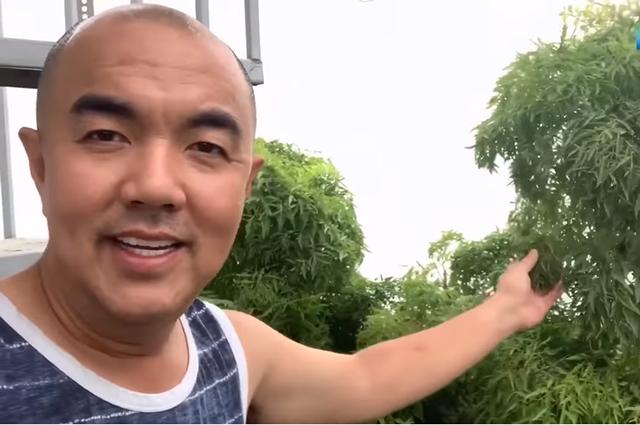 NSND Hồng Vân, Quốc Thuận khoe vườn nhà xum xuê cây trái để tránh dịch - 6