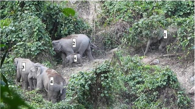 Quảng Nam lần đầu ghi nhận cá thể voi con khoảng 1 tuổi - 1
