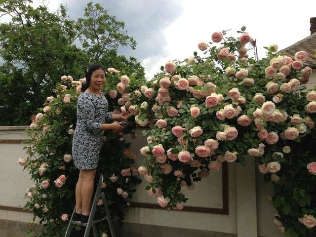 Ngôi nhà phủ kín hoa hồng đẹp không rời mắt của nữ Việt kiều ở Hungary - 5