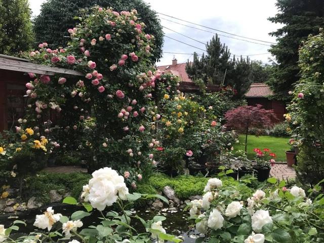 Ngôi nhà phủ kín hoa hồng đẹp không rời mắt của nữ Việt kiều ở Hungary - 3