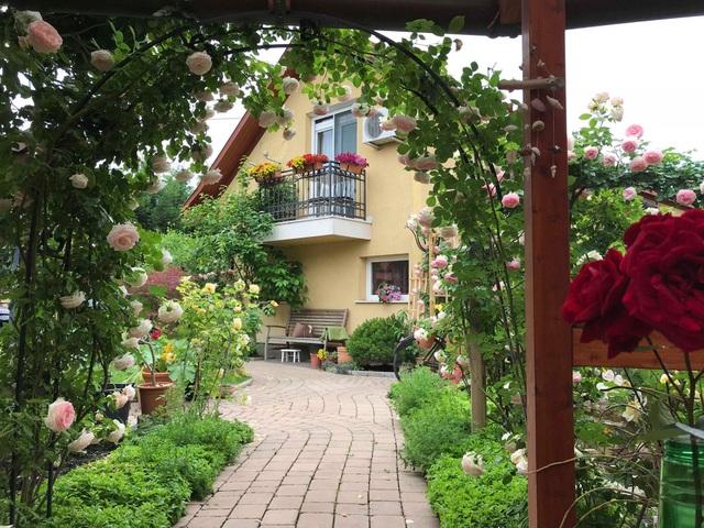 Ngôi nhà phủ kín hoa hồng đẹp không rời mắt của nữ Việt kiều ở Hungary - 1