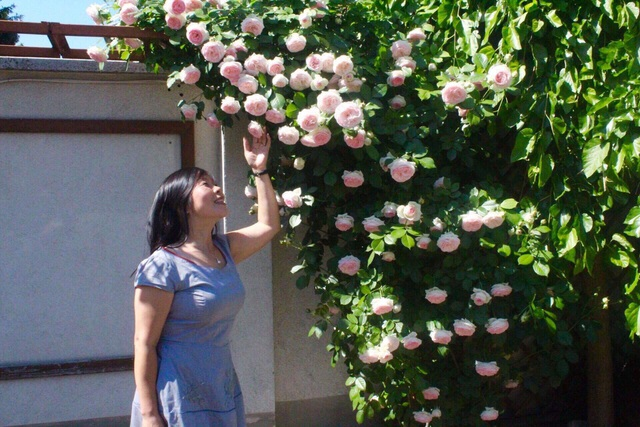 Ngôi nhà phủ kín hoa hồng đẹp không rời mắt của nữ Việt kiều ở Hungary - 12