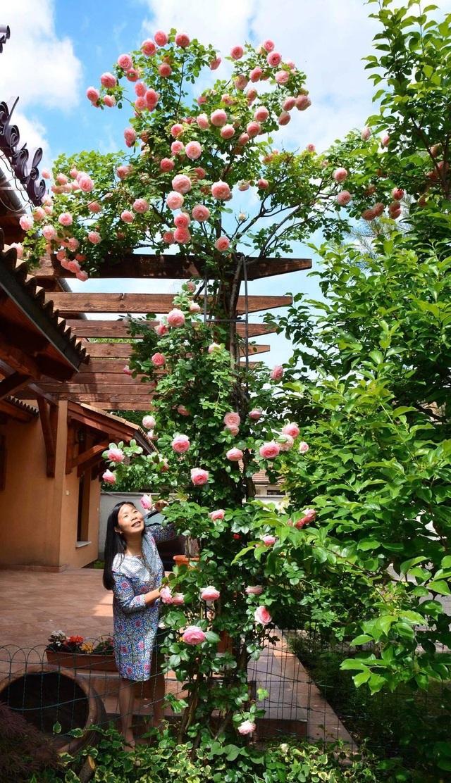 Ngôi nhà phủ kín hoa hồng đẹp không rời mắt của nữ Việt kiều ở Hungary - 2