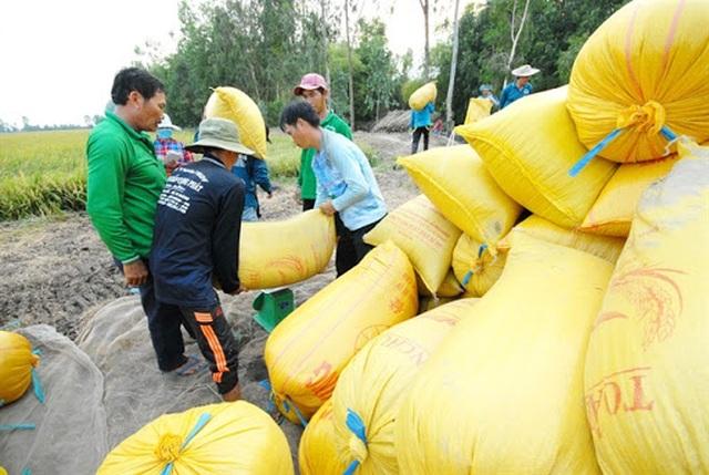 Soi doanh nghiệp bùng hợp đồng bán gạo cho Dự trữ Nhà nước - 1