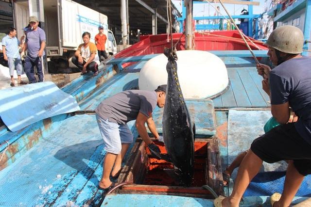 Xuất khẩu cá ngừ đại dương gặp khó vì dịch Covid-19 kéo dài ở châu Âu, Mỹ - 2
